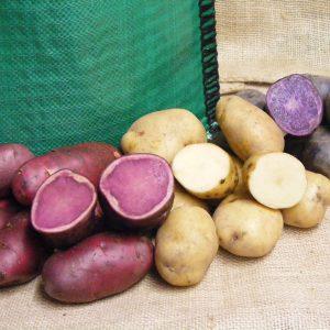 Seed Potatoes-1kg