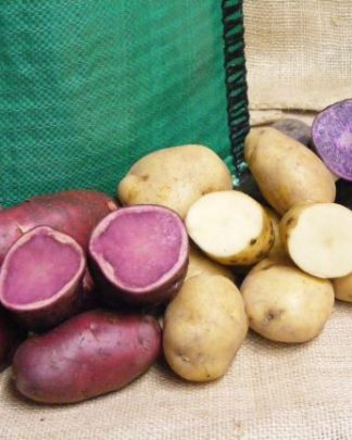 Potato Families
