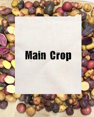 Main Crop